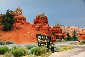 dixie national forest